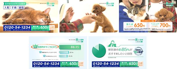 SBIいきいき少短のペット保険TVCM「選ぶ理由」篇